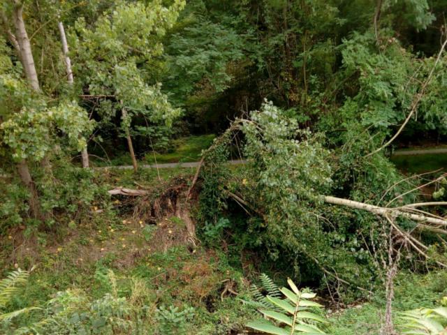 alberi caduti 2.png