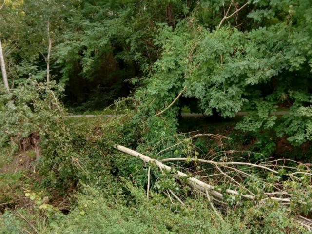 alberi caduti.png