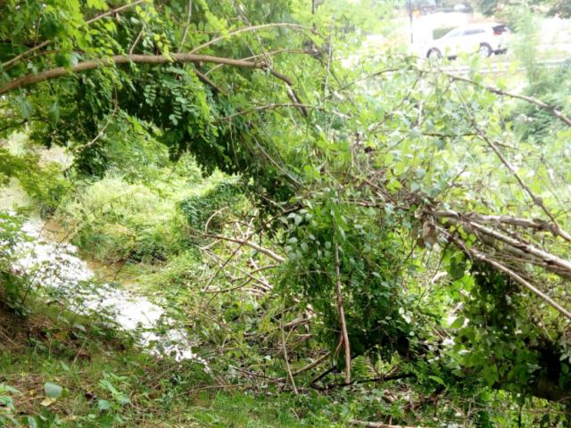 alberi caduti 3.png