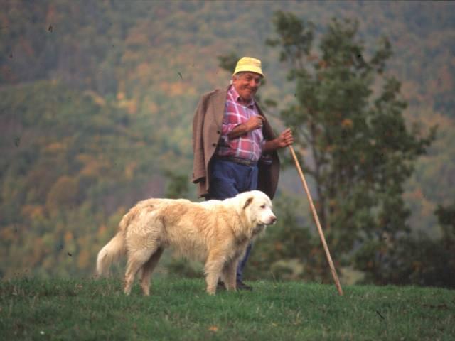 Pastore con cane di razza pirenaica (P. Mattioli).JPG