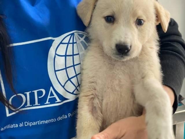 volontaria oipa con cucciolo.jpg