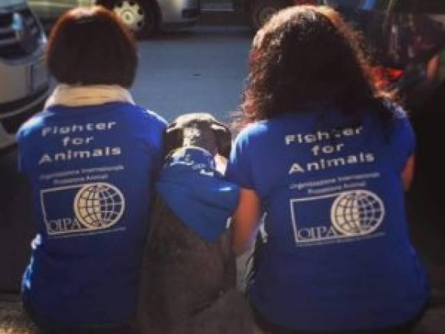 volontari oipa con cane bandana.jpg