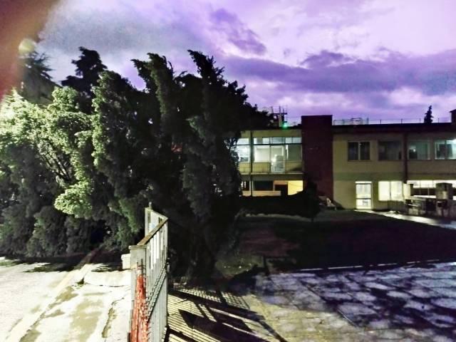 Scuola Curina Arezzo_albero caduto.jpg